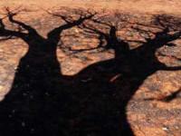 Enrico Montanari – Ombra di boab su terre rosse d'Australia
