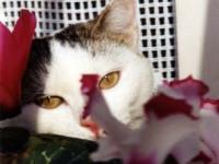 Isabella Lanconelli – Il gatto in relax tra i fiori